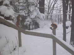 My squirrel buddies!