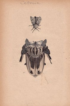 Lucio Palmieri / illustrator - Animali Articolati - an old catalog of scientific...