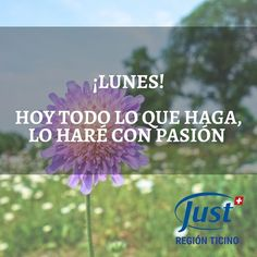 Young Living, Essential Oils, Sun, Frases, Muscle Soreness, Anti Stress, Young Life