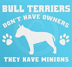 Bull Terriers Don't Have Owners.....