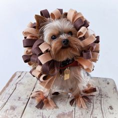 Cheap DIY Pet Costume Ideas. This would be hilarious for Missy or for new puppy (not for Harper--she is black and it wouldn't look good on her)
