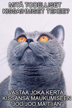 24 asiaa, jotka vain kissaihmiset ymmärtävät Mma, Funny Animals, Dog Cat, Funny Stuff, Cats, Movies, Poster, Funny Things, Gatos