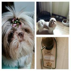 A Malu e toda a sua fofura! #petitcasadamontanha #pet   #hotelemgramado #gramado #serragaucha
