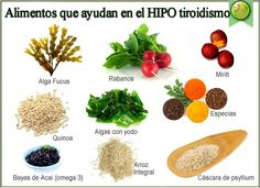 Foto: TRATAMIENTO NATURAL DE HIPOTIROIDISMO  ¿ Qué es el hipotiroidismo?  ¿ Por qué se produce el hipotiroidismo?  ¿ Qué es el bocio?  ¿Se puede prevenir el hipotiroidismo?   El HIPOTIROIDISMO es un trastorno metabólico caracterizado porque la tiroides produce poca hormona tiroidea.  La tiroides es una glándula endocrina muy importante para el metabolismo que esta situada en la parte inferior delantera de la laringe. Esta encargada de la producción de las hormonas tiroideas