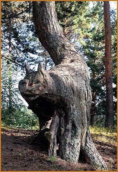 Cat shaped tree