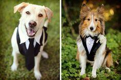 Ideas para el look del perro en la boda #bodas #ElBlogdeMaríaJosé #Perro #PetFriedly #Mascotas