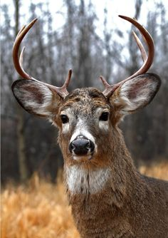 Deer demonstrate great examples of how to be attentive.                                                                                                                                                                                 More