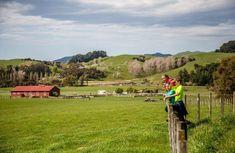 Top trails in the Wairarapa - WellingtonRegionalTrails.com Park Trails, Bike Trails, Biking, Perfect Place, The Good Place, The Hutt, Old Trees, Forest Park, Legolas