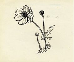 """timeofdaffodils: """" Flower sketch by Sylvia. This one's for you Lady Lazarus. """" """"Meadow-Flowers"""" by Sylvia Plath. Pen and ink on paper. Sylvia Plath Quotes, Plath Poems, Collages, Literary Tattoos, Literary Quotes, Flower Sketches, Meadow Flowers, American Poets, Illustrations"""