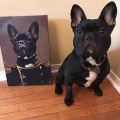 Crown and Paw is a pet focused home decor brand that prints high quality custom pet art featuring your very own pet. Print your pet on a custom canvas in an authentic renaissance style portrait and give them pride of place in your home. Renaissance Era, Unique Animals, Custom Canvas, Oeuvre D'art, Pet Portraits, Les Oeuvres, Fur Babies, Your Pet, The Incredibles