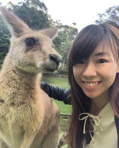 Selfie with kangaroooooo  #currumbinwildlifesanctuary #australia #kangaroo by valerienoellee http://ift.tt/1X9mXhV