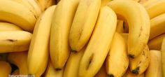 GMO BANANAS Are Coming To A Supermarket Near You, Thanks To Bill Gates   Voice Of People