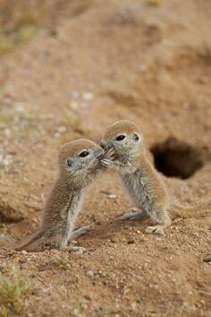 Baby Meerkats | Wonderful Places