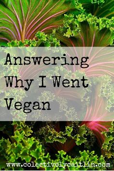 Why I Went Vegan - Collectively Caitlin