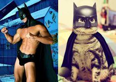Men & cats & superman