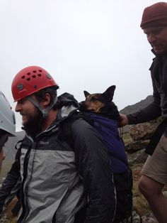 Strangers unite to rescue abandoned dog from treacherous mountain » DogHeirs | Where Dogs Are Family « Keywords: German Shepherd, Beirstadt Mountain, colorado