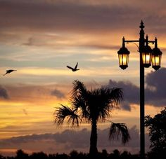 Top 8 Things to Do in Key West