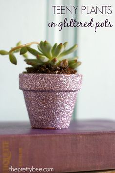A festive and easy gift: diy succulents in glittered pots.
