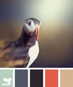 Puffin Palette by Design Seeds Colour Schemes, Color Combos, Color Patterns, Colour Palettes, Color Balance, Design Seeds, Colour Board, Color Stories, Color Swatches