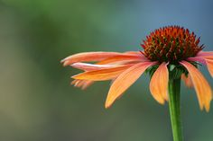 Connie Etter Photography: Orange