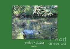 Ducks A Dabbling by Linda Prewer #ducks #dabbling
