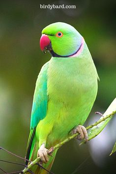Are you retired? Do you live alone? More importantly, want to pet birds? Do you love the parrot bird most? This guide decodes everything for you that you have to know before adopt any pet birds. Cute Birds, Pretty Birds, Beautiful Birds, Animals Beautiful, Cute Animals, Wild Animals, Love Birds Pet, Exotic Birds, Colorful Birds