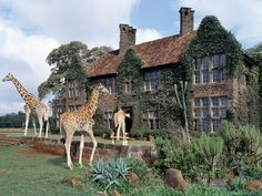 GIRAFFE MANOR Nairobi, Kenya  This intimate hotel outside of Nairobi lets you get up close and personal with Rothschild giraffes. The original manor was built in 1932 and has served as a giraffe sanctuary since the 1970s. Today, Giraffe Manor has six bedrooms and offers guests the chance to share their breakfast table with the eight resident giraffes. All of the hotel's profits go to support the African Fund for Endangered Wildlife .