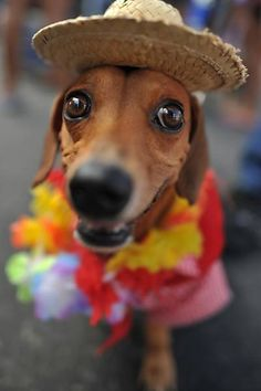 "Dogs in Rio Carnival (3): Dogs in costumes participate in the ""Blocão"" on Copacabana Beach (Rio de Janeiro)."