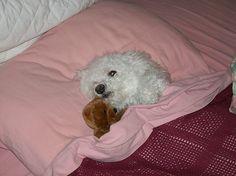 Night night... Good Night, Night Night, Dog Pictures, Pets, Animals, Passion, Inspirational, Friends, Nighty Night