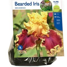 Bearded Iris Decadence Bulbs (Lb22712) at Lowes.com Winter Plants, Summer Plants, Outdoor Flowers, How To Attract Hummingbirds, Water Wise, How To Grow Taller, Bearded Iris, Grow Together, Iris Flowers