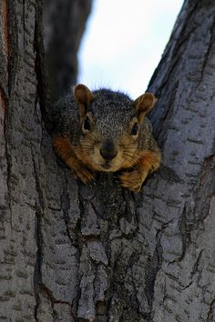 Flopped Squirrel | Flickr - Photo Sharing!