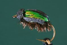Little Green Wattle Beetle