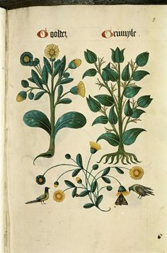http://upload.wikimedia.org/wikipedia/commons/2/24/The_Tudor_pattern_book_MS._Ashmole_1504_14.jpg