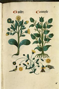 http://upload.wikimedia.org/wikipedia/commons/2/24/The_Tudor_pattern_book_MS._Ashmole_1504_14.jpg