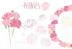 Flower peonies clipart by Vector shop on Creative Market