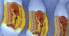 la-recette-des-nutritionnistes-perdre-la-graisse-abdominale-rapidement