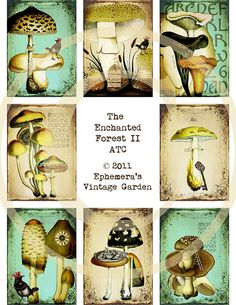 mushrooms for woodland theme