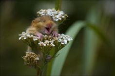 Цветы и хомяки