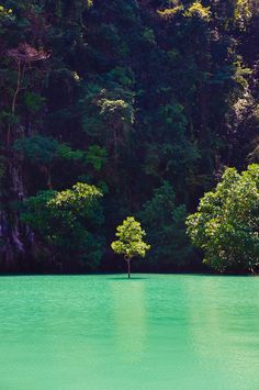 I love this beautiful place, but mostly I love the single tree standing alone in all it's beauty out in the water.  Away from all the others.  That's how I feel as an individual.