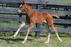 Tales from the Crib: Oscar Nominated | 2016 Kentucky Derby & Oaks | May 6 and 7, 2016 | Tickets, Events, News