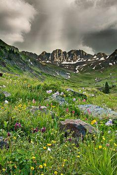 American Basin, near Silverton, Colorado. Mother Nature's Garden for all to enjoy!