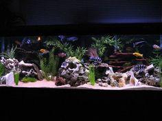 16 best saltwater tank setup images saltwater tank setup fish