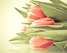 coral tulips= essential :)