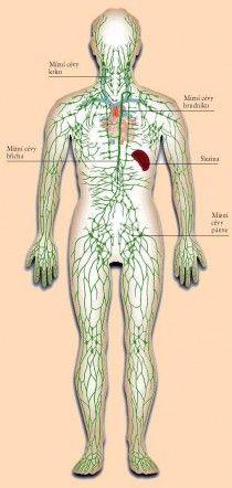 Nefunkční lymfatický systém, to je vstupenka k závažným chorobám. Lymphatic System, Anti Cellulite, Healthy Recipes For Weight Loss, Health Care, Health Fitness, Body, Medicine, Fitness, Health