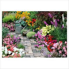 English Cottage Garden   Petunias, Ageratum, busy Lizzies, Rudbeckias, fibrous rooted Begonias and Lobelia carpet around Hostas and Liatris