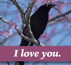 Say I Love You, Love You So Much, Love Is Sweet, Romantic Love Messages, Romantic Words, I Love You Ecards, Perfect Word, You Are Special, One Wish