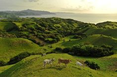Vayang Rolling Hills, Batanes, The Philippines | 54 Fantastic Everyday Scenes From The Philippines