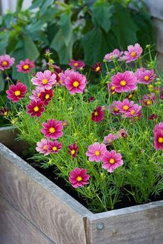 Pretty flowers in a wooden box Cosmos Flowers, Pink Flowers, Beautiful Flowers, Pink Garden, Dream Garden, Amazing Gardens, Beautiful Gardens, Plantar, Plantation