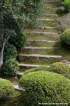 Moss Stone Garden Steps - Elements like this can add a lot of class and character to a garden and especially a shady area. Moss is one of those elements that give gardens and landscapes an established atmosphere as though it has been there for a very long time. When creating a new yard, patio, or courtyard and you want it to look old and established, try using elements like moss, old weathered and tumbled brick pavers, and old decor. Moss can mane hardscapes like these steps look dated and old.