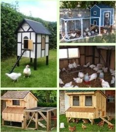 Chicken Coop - Choosing the right chicken coop for your urban backyard chickens
